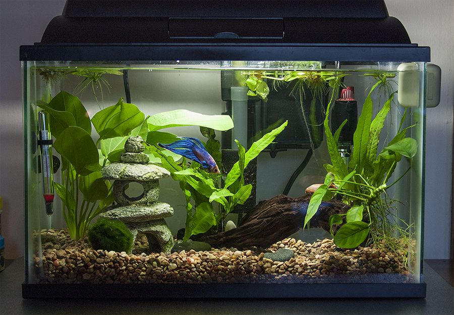 Planted tank show and tell page 76 betta fish and for Fish tank care