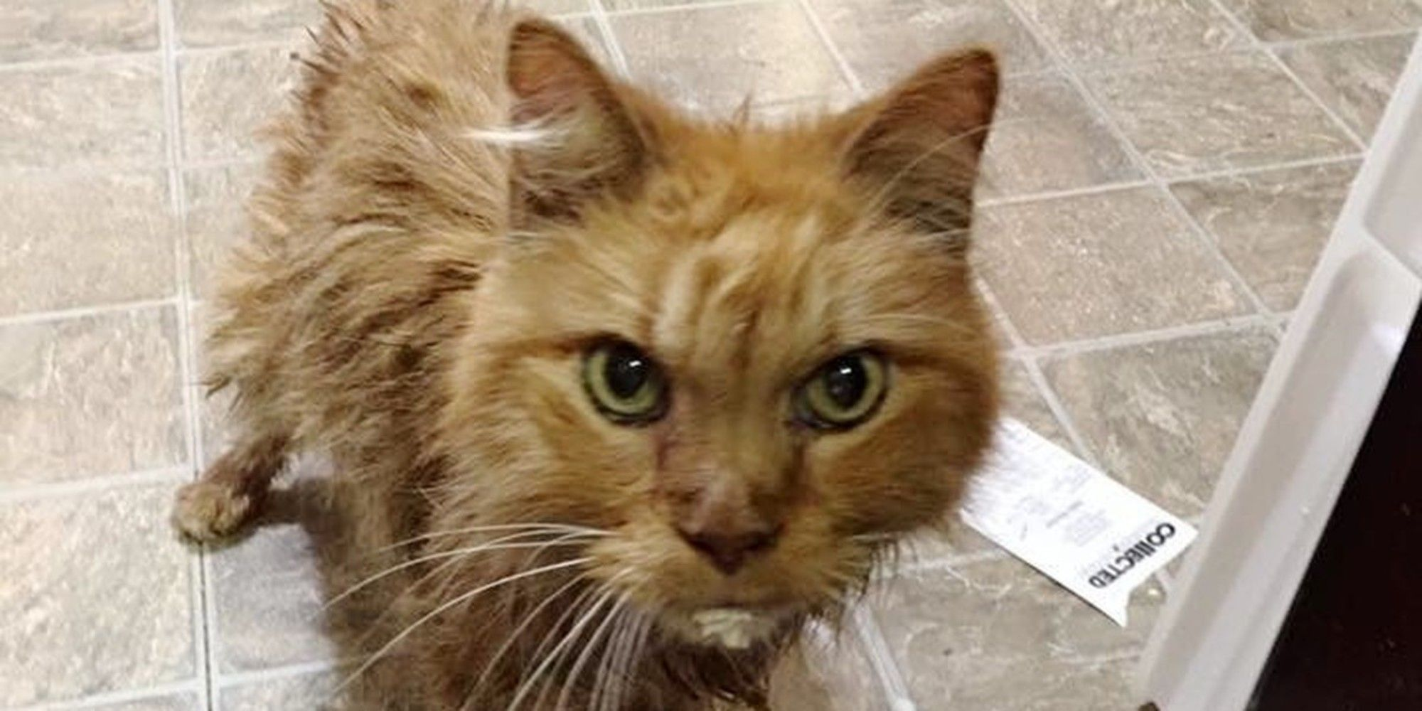 20 Year Old Cat is So Happy to Be Given a Home, He Can't
