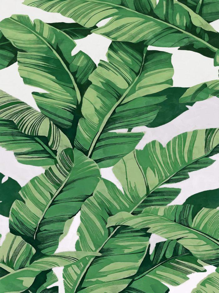 Tropical Banana Leaves VI Art Print By CatyArte Worldwide Shipping Available At Society6