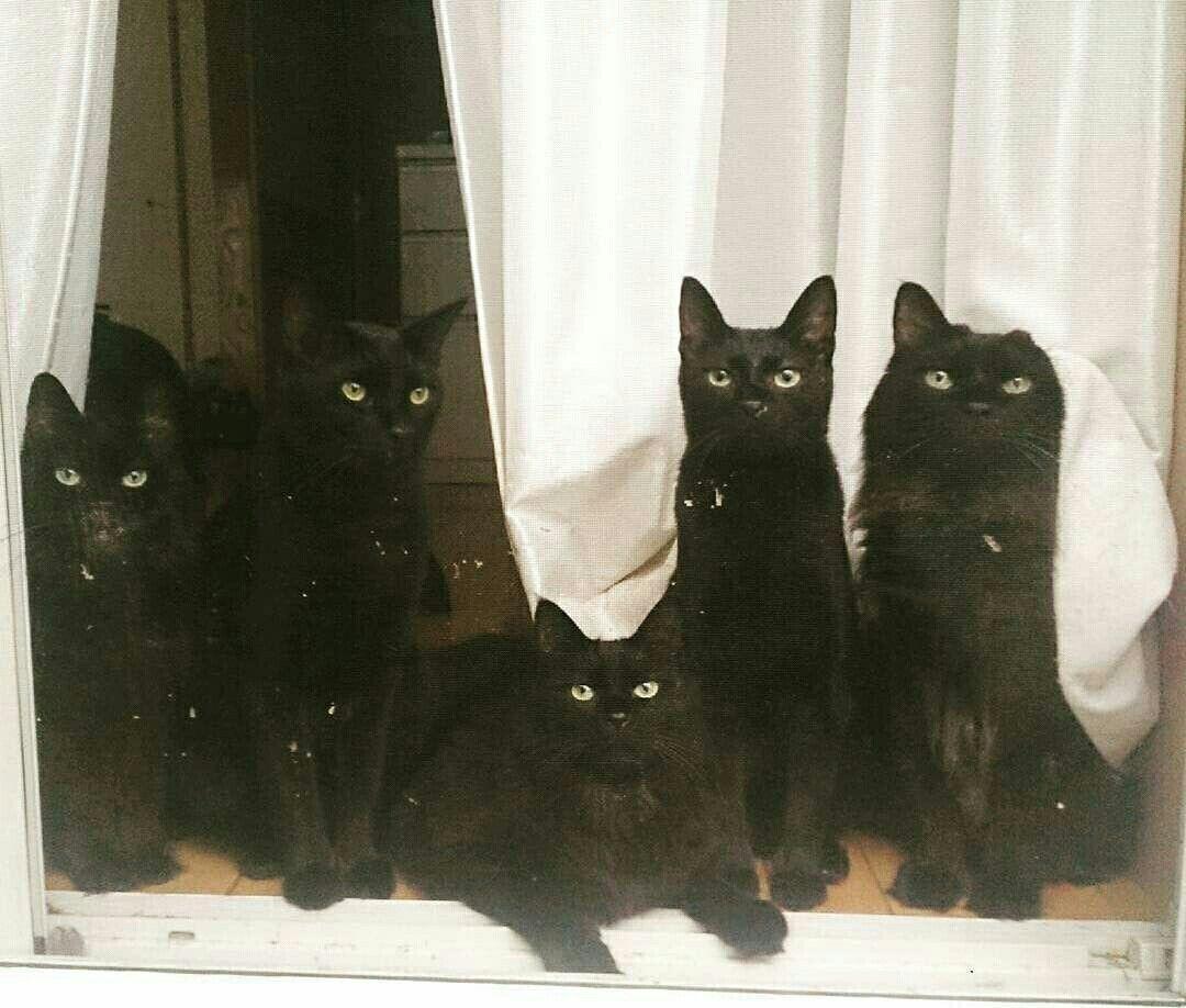 Quero Todos Ilovebykimberley Cats Cats And Kittens Cute Animals