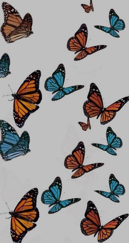 Aesthetic Butterfly In 2020 Butterfly Wallpaper Iphone Aesthetic Iphone Wallpaper Iphone Background Wallpaper
