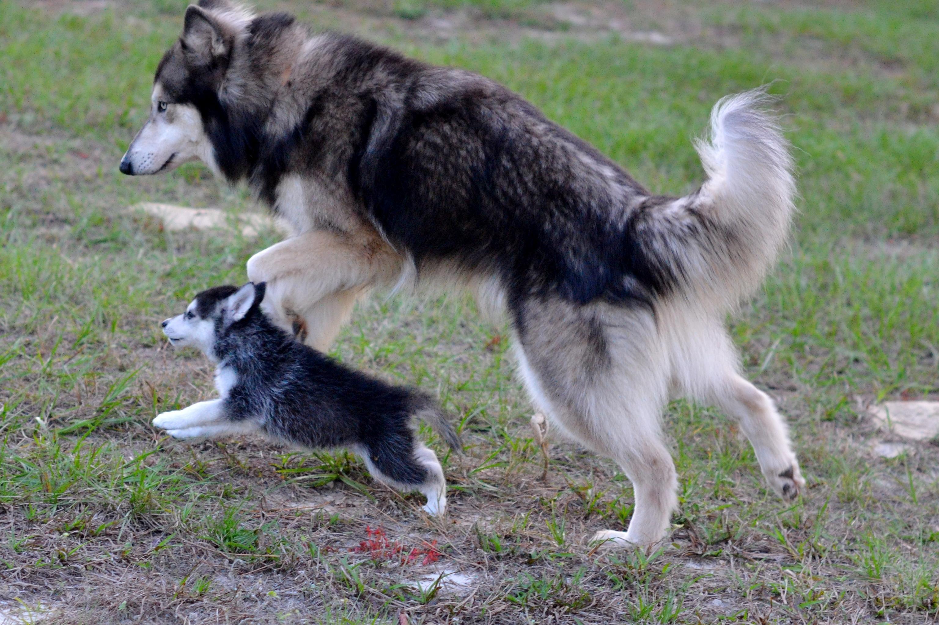 Father And Sonhttps I Redd It H4y04b543kcy Jpg Puppies Dog