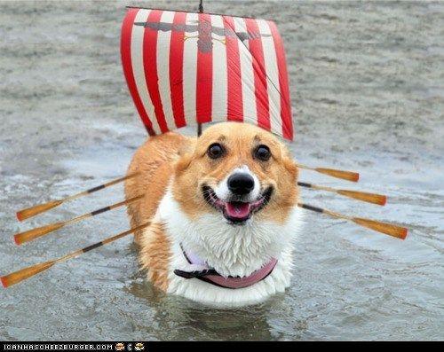 dogboat