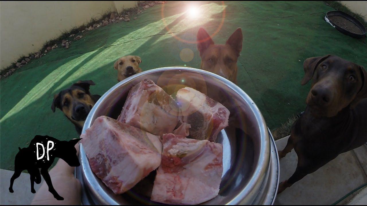 Raw Feeding Wolf Hybrid And Pitbull Mix Eating Raw Bones Eating