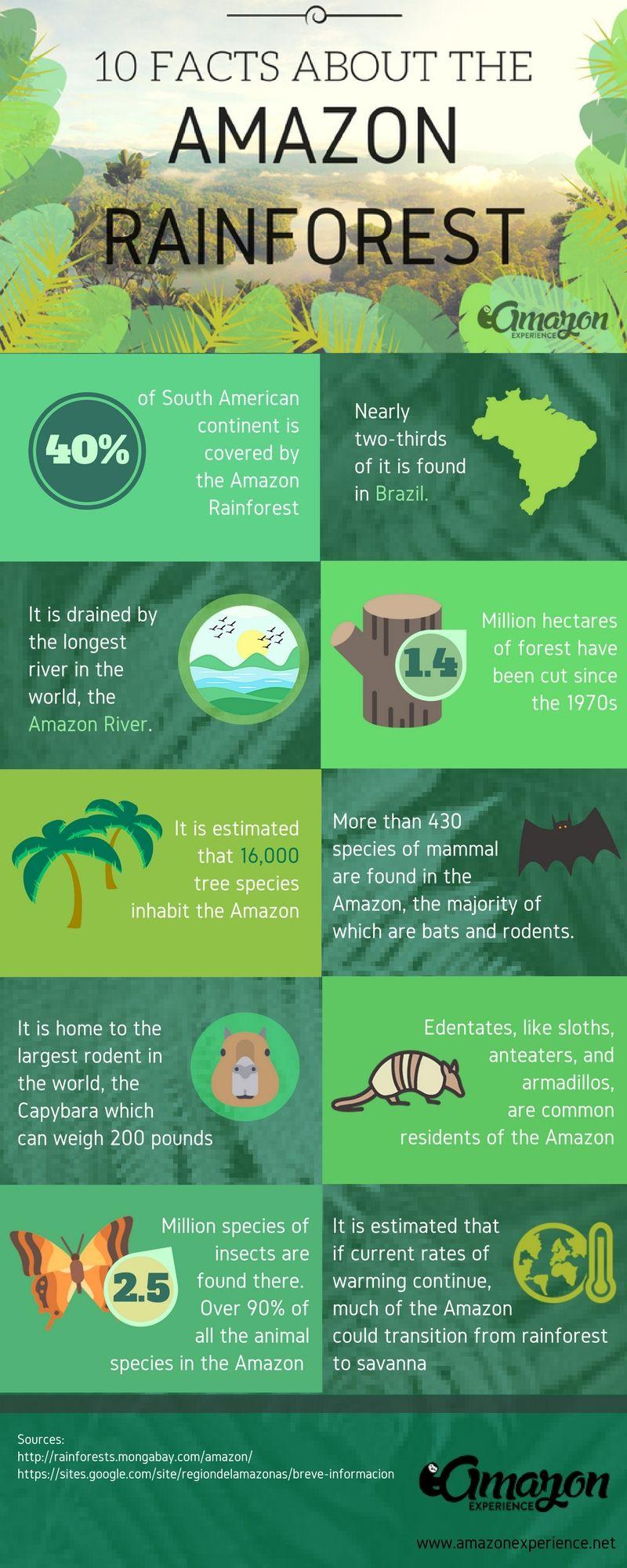 amazon rainforest facts - 736×1840