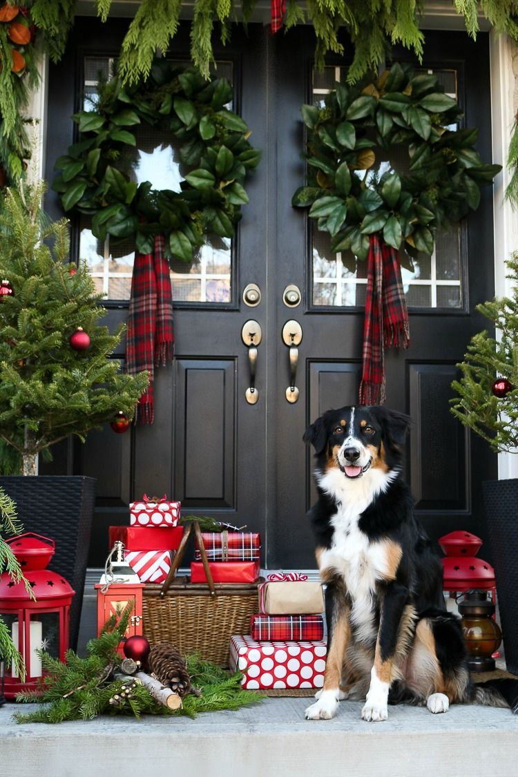 its a PUPPY! a big puppy and presents. thats what i always want. thank you…