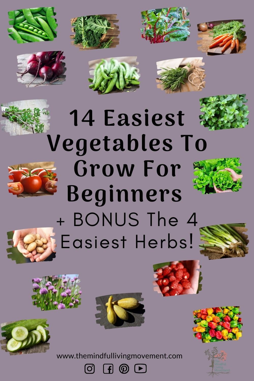 I narrowed it down to 14 vegetables and 4 herbs to give you a large selection of options to choose from to start your garden.#beginnergardener #urbangardening #growyourownfood #howtogarden #easygardening #gardentips #gardenideas #diygarden #canadiangardening #kidsgardening#gardenblog