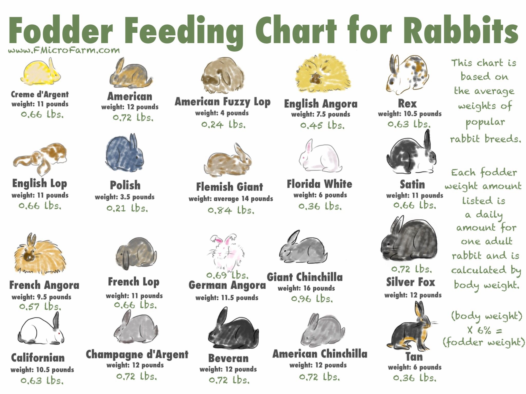 Fodder Feeding Chart For Rabbits Printable Rabbit Breeds