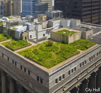 Chicago Cultural Center Green Roof City Hall Architecture Green Roof Chicago Landmarks