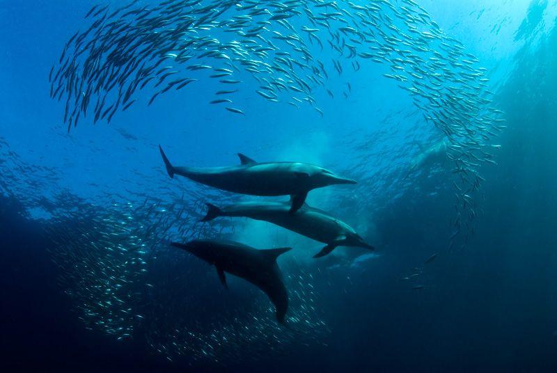 Hunting Photo by Mikael Jigmo God\u0027s Handy work Pinterest - marine biologist job description