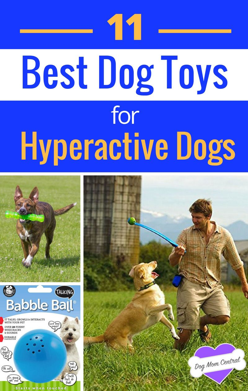 The 11 Best Toys For Hyperactive Dogs Hyperactive Dog Best Dog