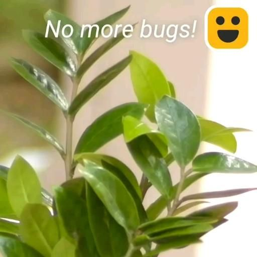 Photo of 12 Clever Plant Hacks!