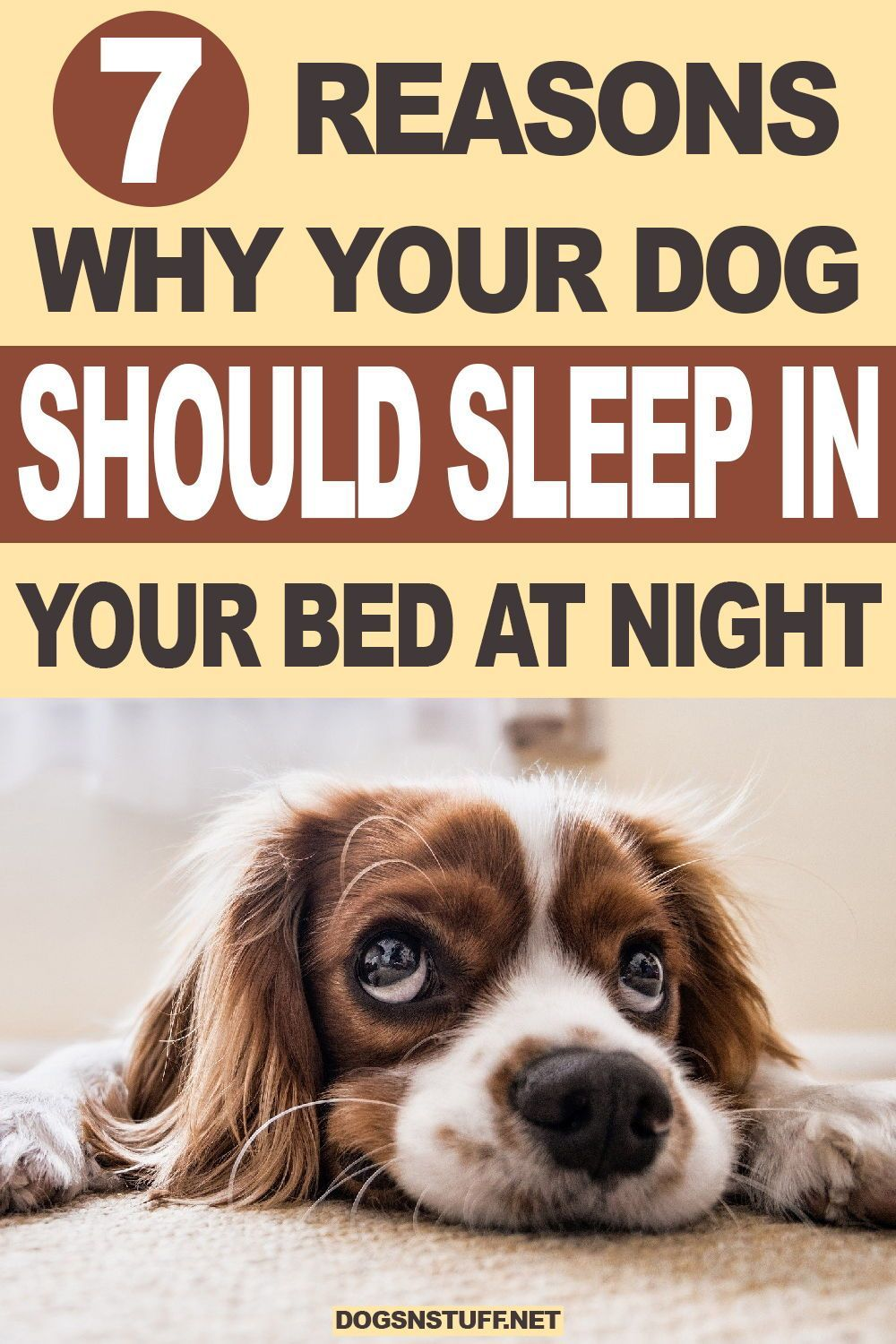 4c8d080559fc662dca2749978776bfea - How Do I Get My Puppy To Sleep In His Bed