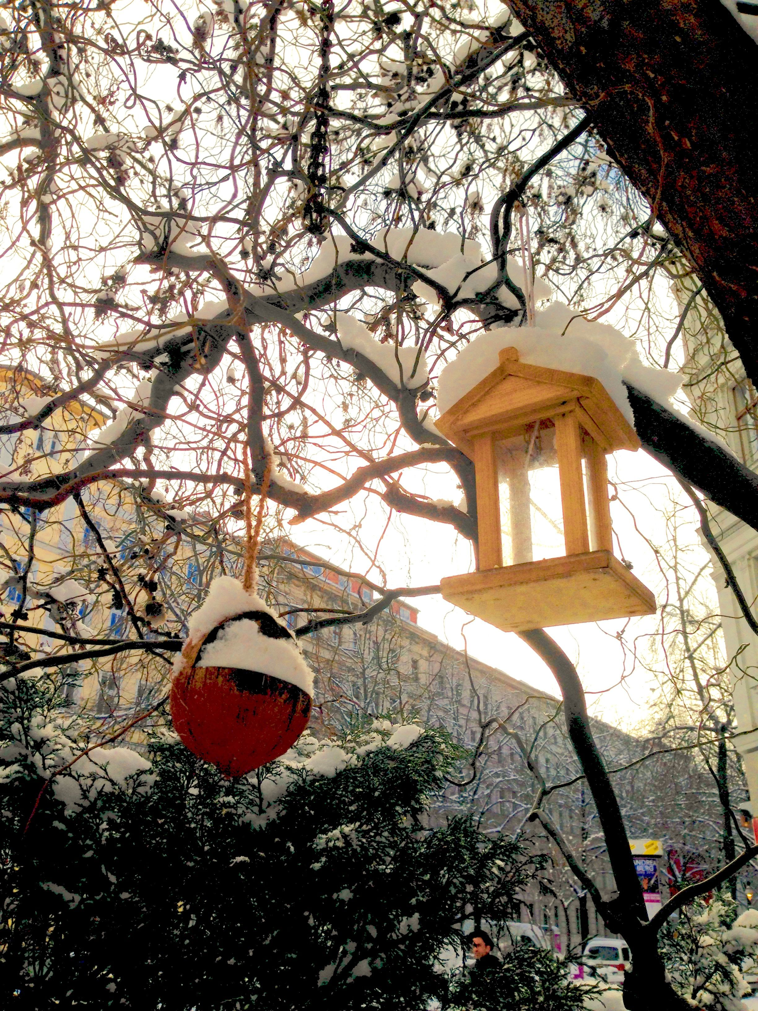 Ornament and birdhouse enjoying the sun after a night of snow