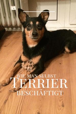 Terrier Beschaftigen Terrier Hund Beschaftigen Und Hunde
