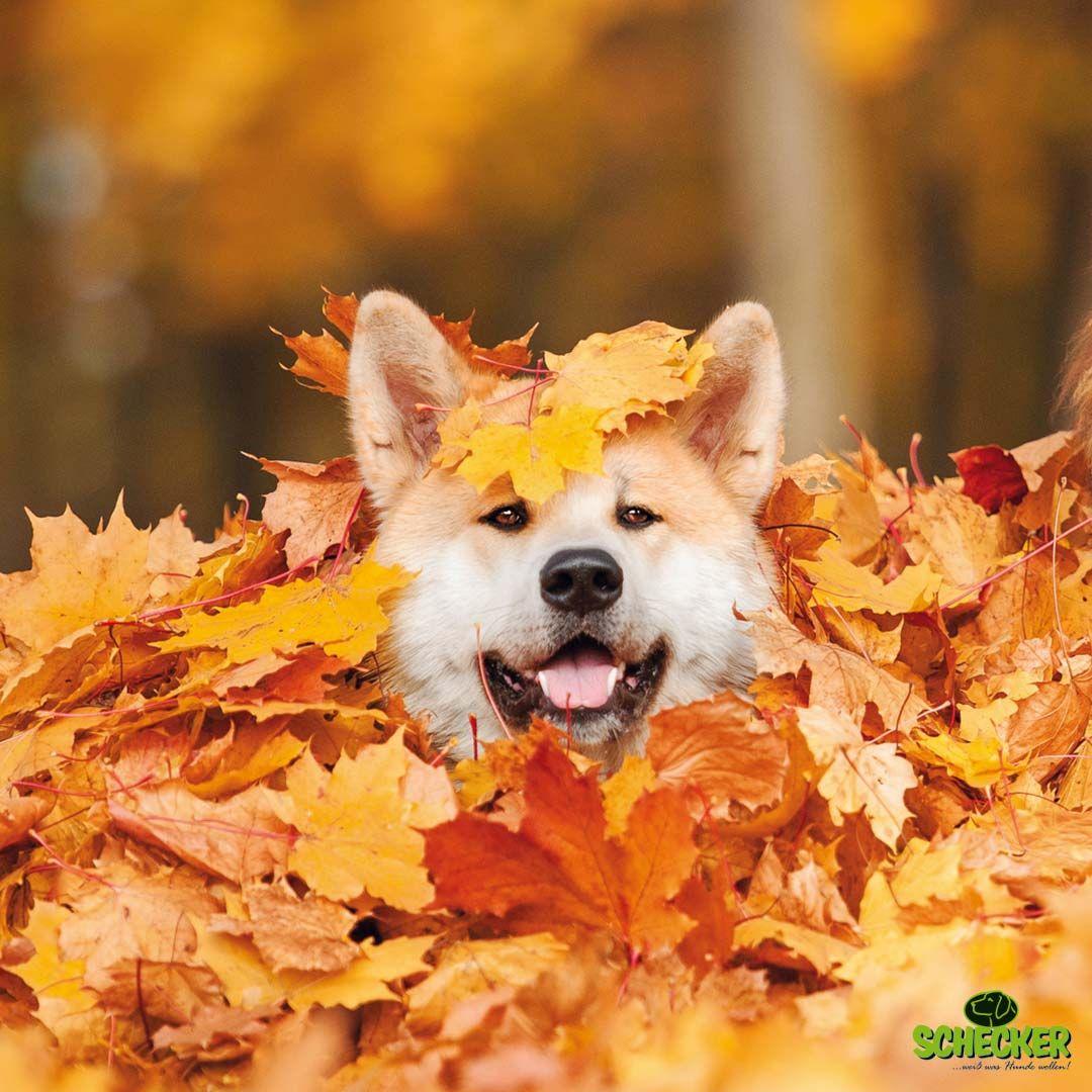 Schones Und Sonniges Herbst Wochenende Schecker Wochenende Freitag Hund Hundefutter Hunde Shop Hunde Hunde Futter