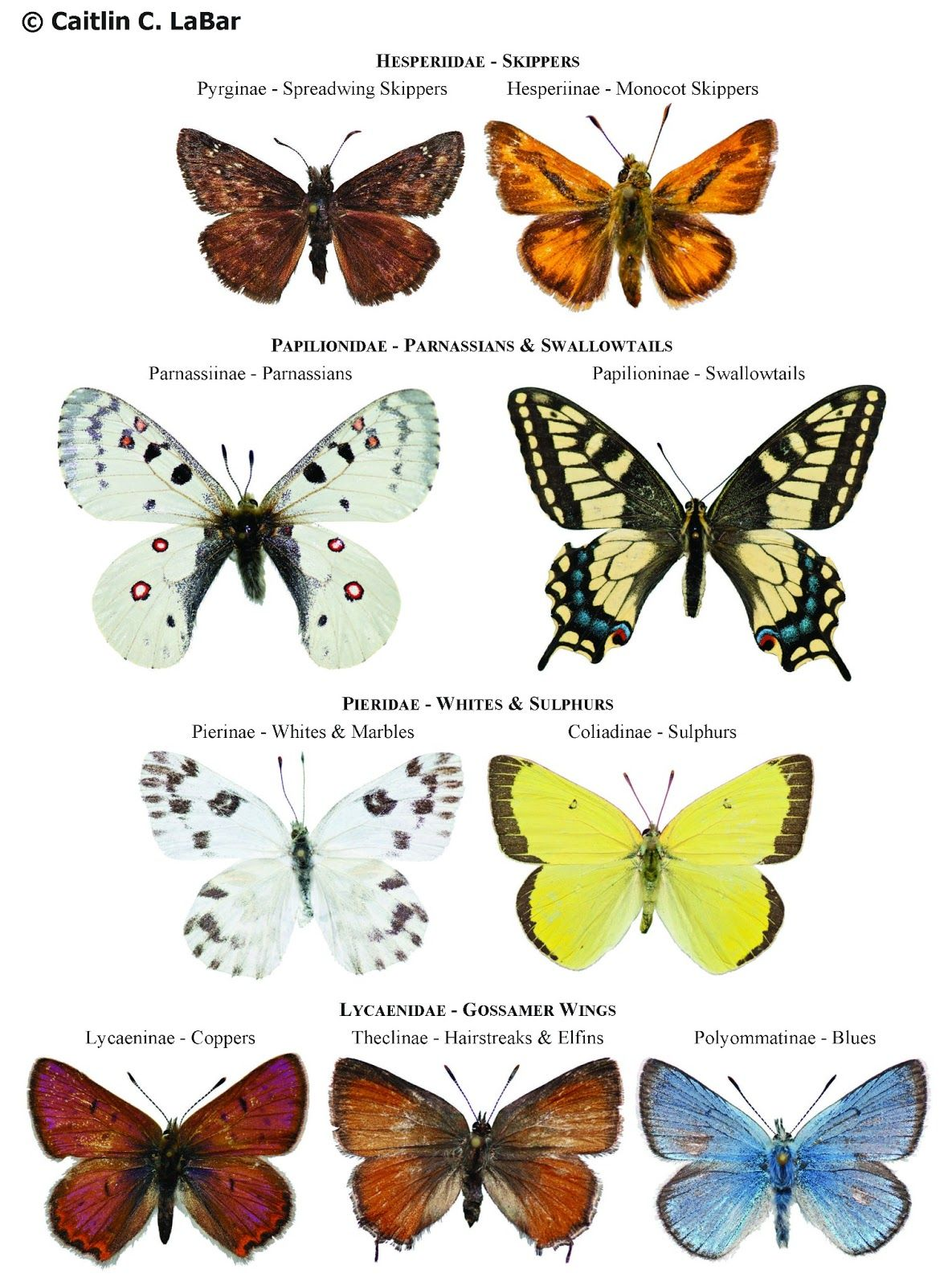 types of butterflies with pictures and names Northwest