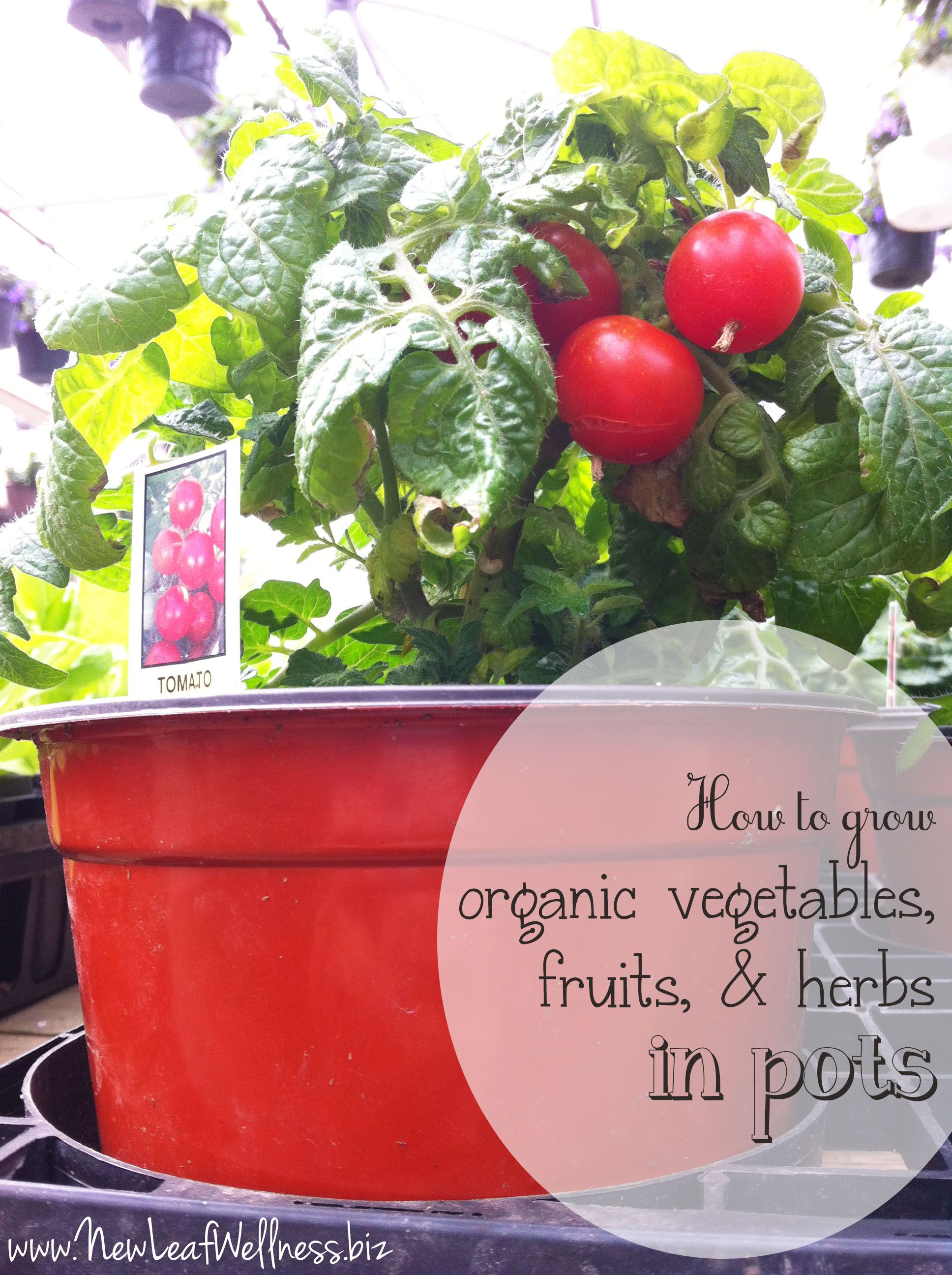 How To Grow Organic Vegetables, Fruits, U0026 Herbs In Pots On Your Deck.  Awesome Info From @Megan Margraff Greenhouse!