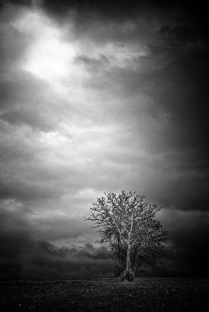 Epic Tree Still Epic Bianco E Nero Immagini Bosco