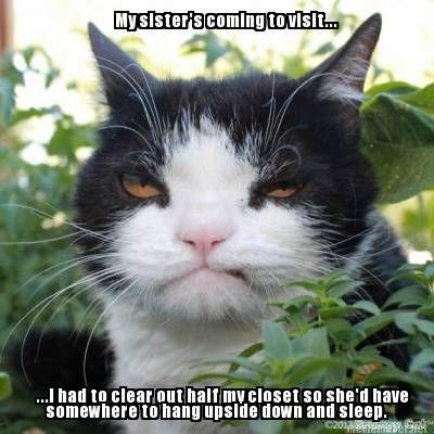frustrated cat meme