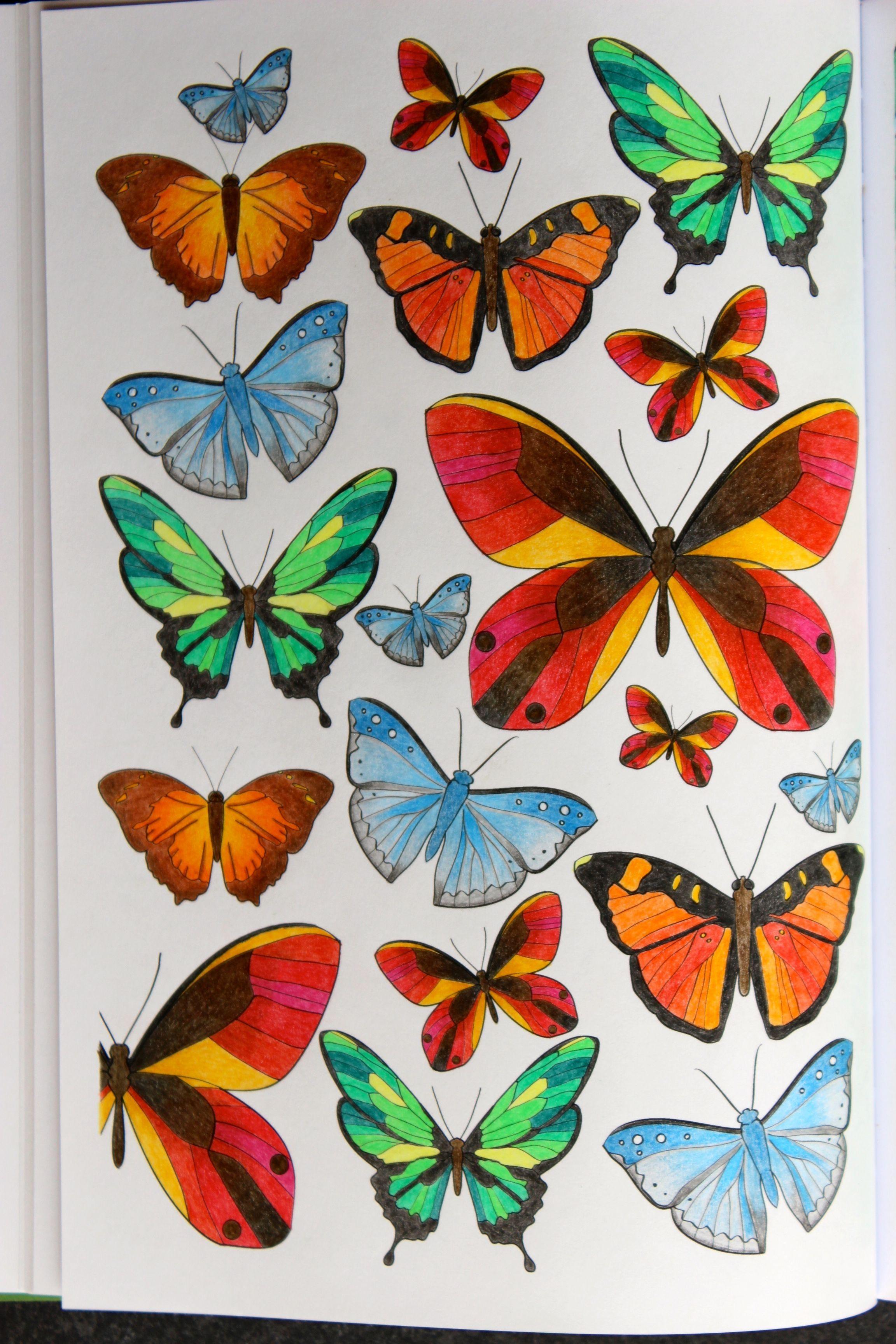 livre jardins extraordinaires crayons de couleurs divers coloriage pinterest jardin. Black Bedroom Furniture Sets. Home Design Ideas