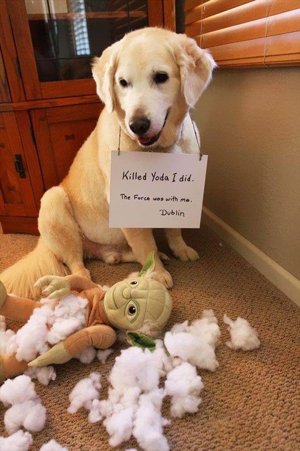 смешные фото виноватых собак карась уже находится