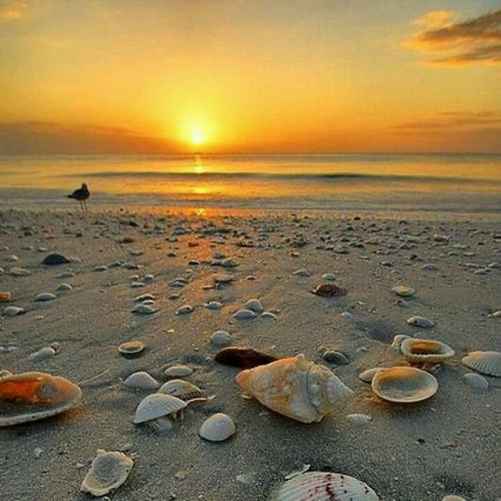 Marco Island Beaches: Pin By Cm Peterson On Favorite Places & Spaces