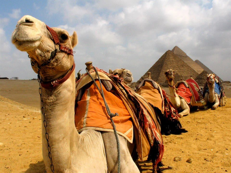 Day Trip from Hurghada to Pyramids by Plane in 2020