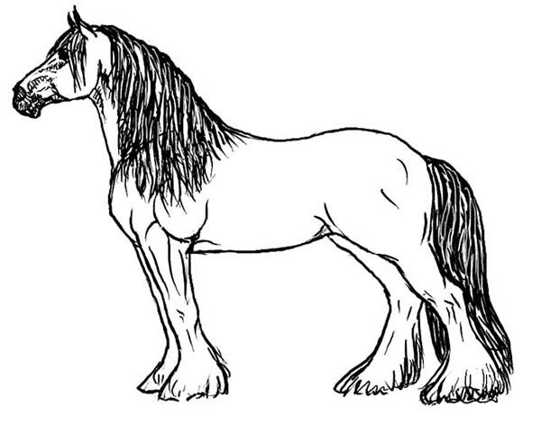 image result for pictures of horses to color coloring pages