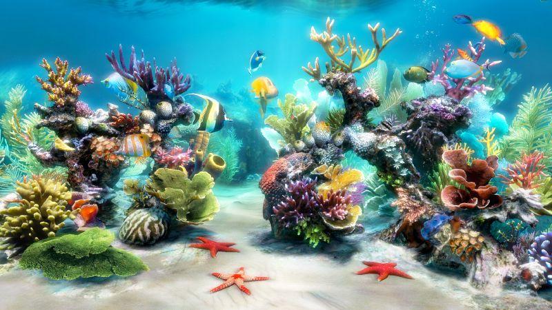 afficher l 39 image d 39 origine aquariums oc ans pinterest fond ecran aquarium et fond anim. Black Bedroom Furniture Sets. Home Design Ideas
