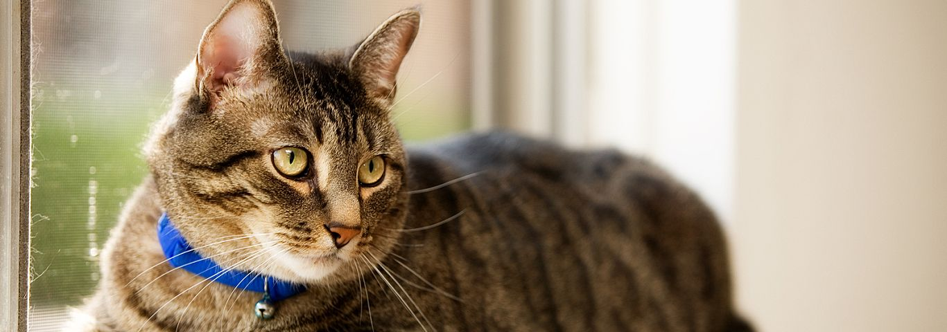 Diy cat stain odor remover that actually works hills