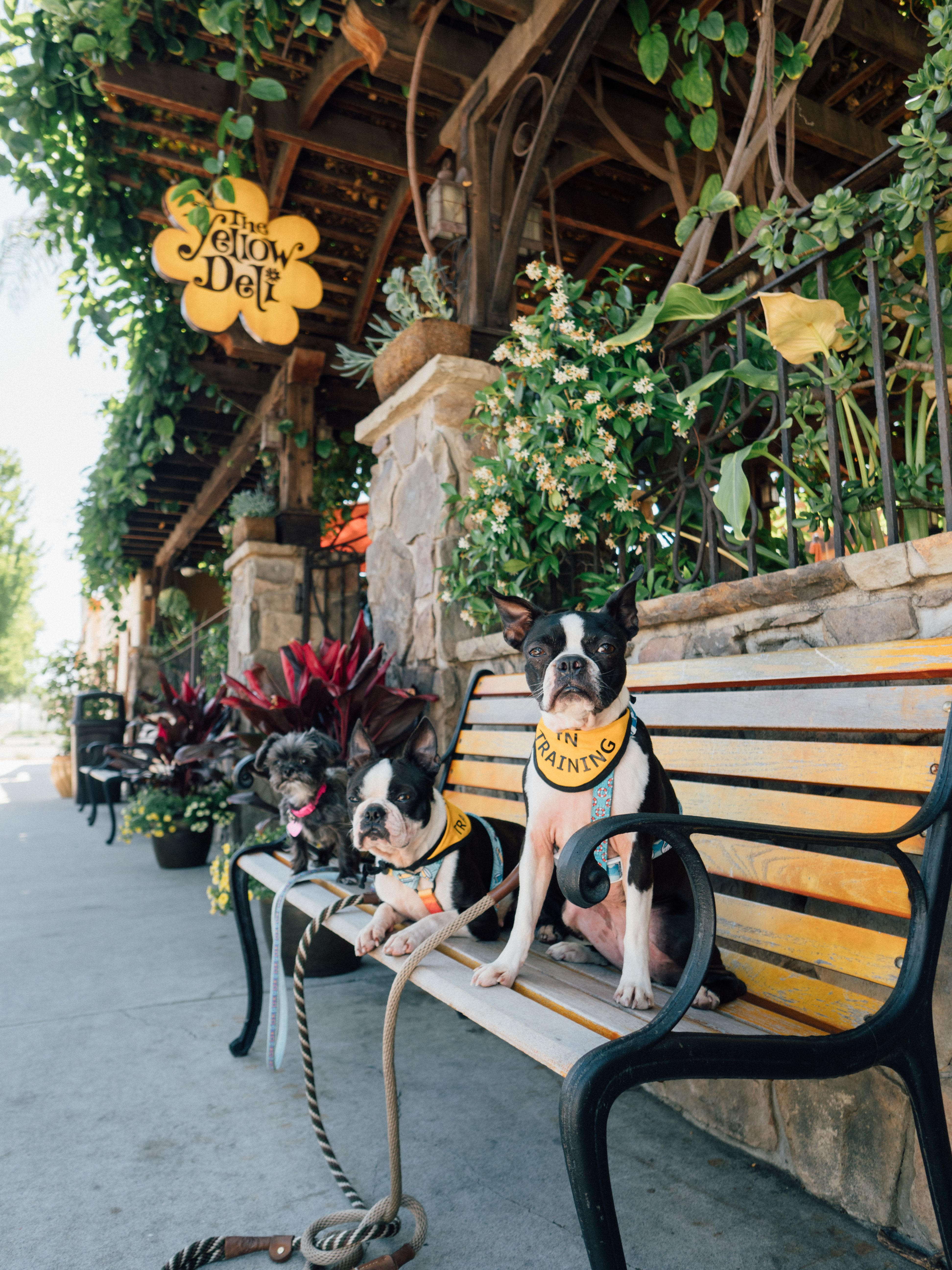 Dog Friendly Vista Instagrammable Murals And The Yellow Deli