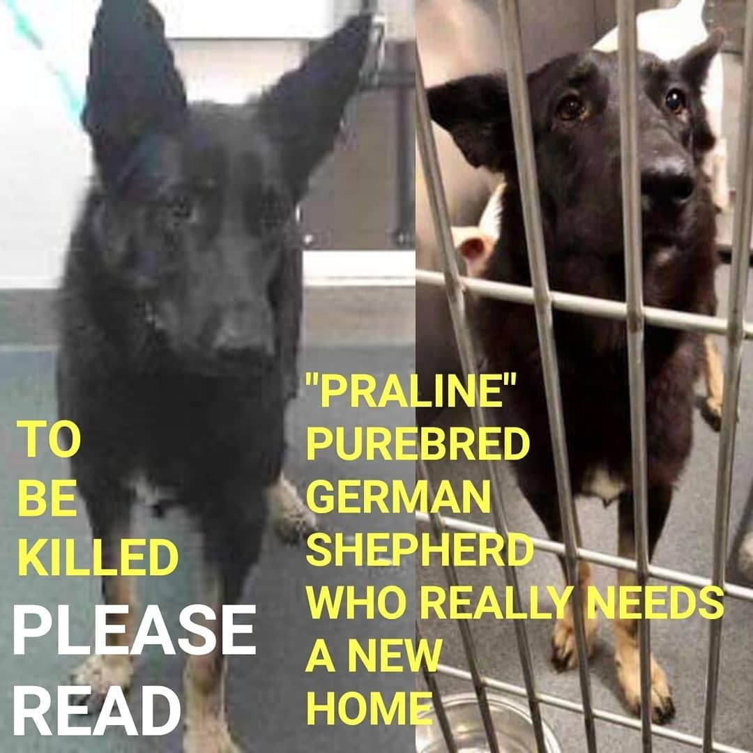 6 21 19 Praline To Be Killed Her Owner Dumped Her After