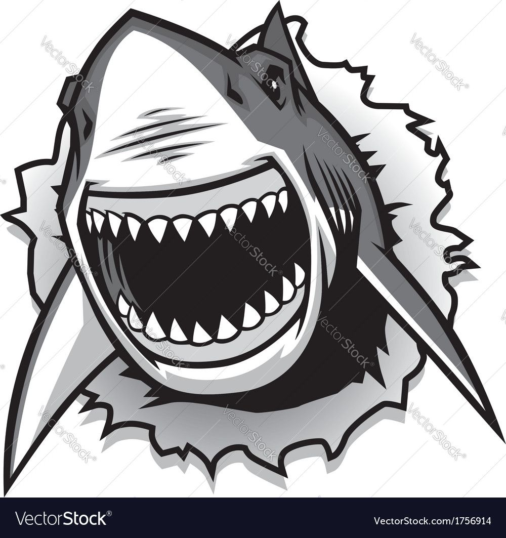 vector of Great White Shark ripping with opened mouth. Download a ...