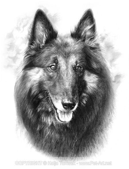 Pencil Portrait of Tervueren