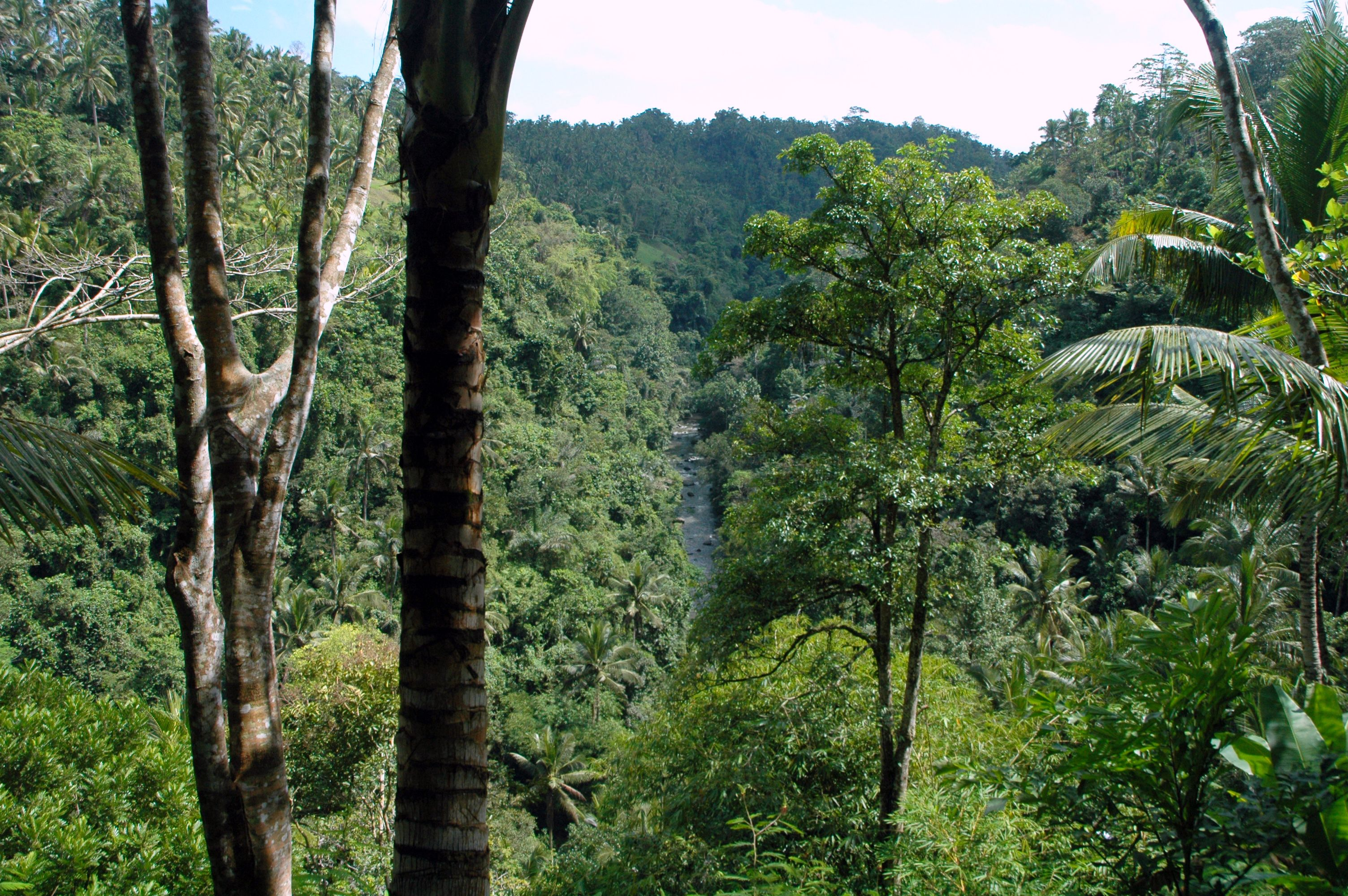 Rain Forest Indonesia travel, Rainforest, Forest