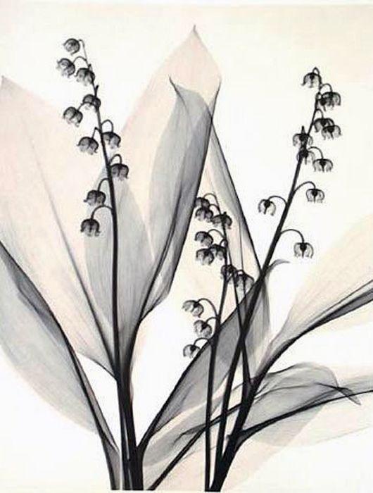 x-ray art by Judith K McMillan   Art   Pinterest   Tattoo ideen ...
