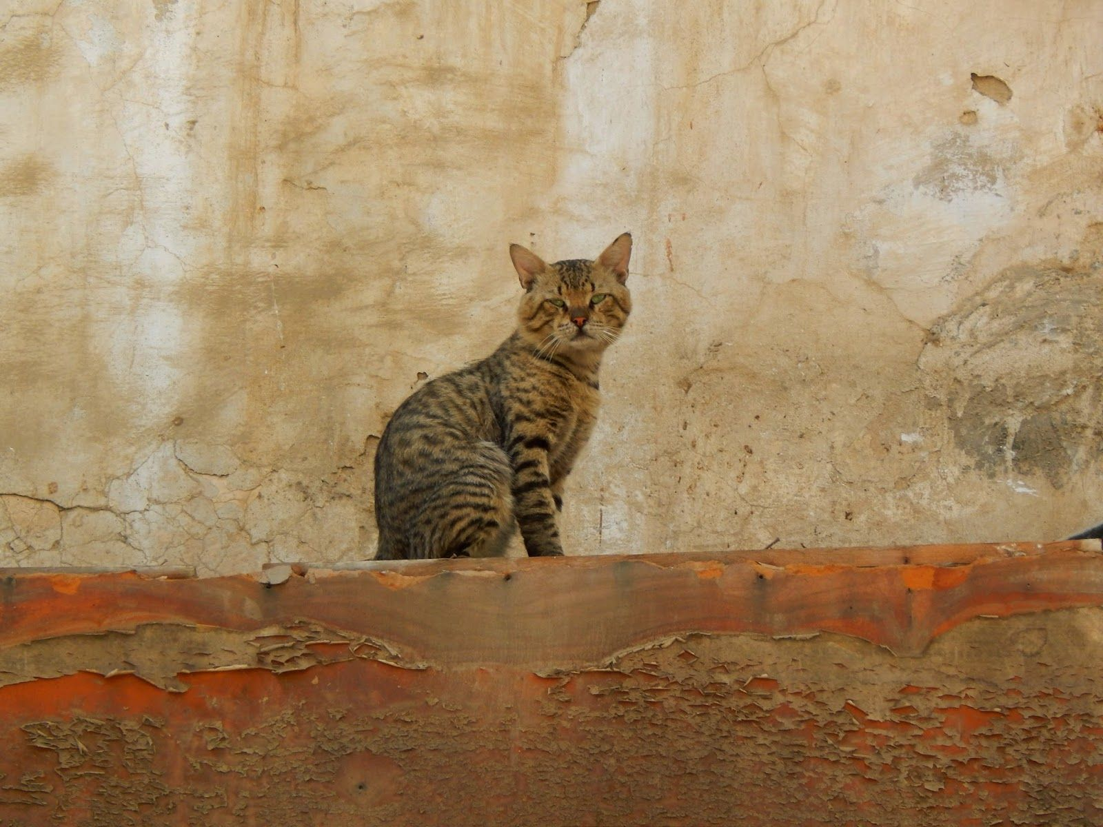 #cats #feline #jeddah #saudiarabia
