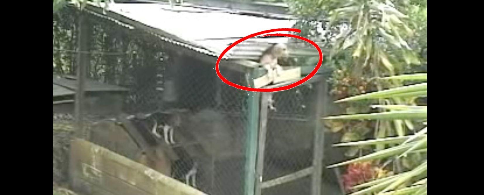 Beagle Escapes Cage Funny Stuff Beagle Cage Pets
