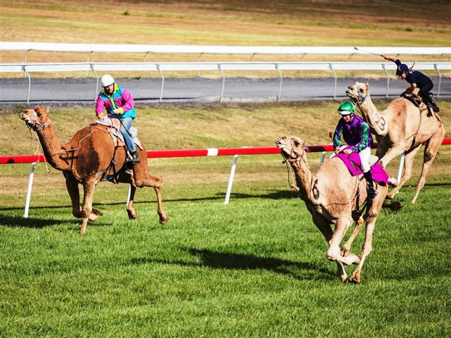 Come along for a family fun day, with jumping castles, face painting, merry-go-round, variety stalls, and camel rides. Watch eight camel races with camels from New South Wales, Queensland, Victoria and South Australia.Proudly supporting Camp Quality.