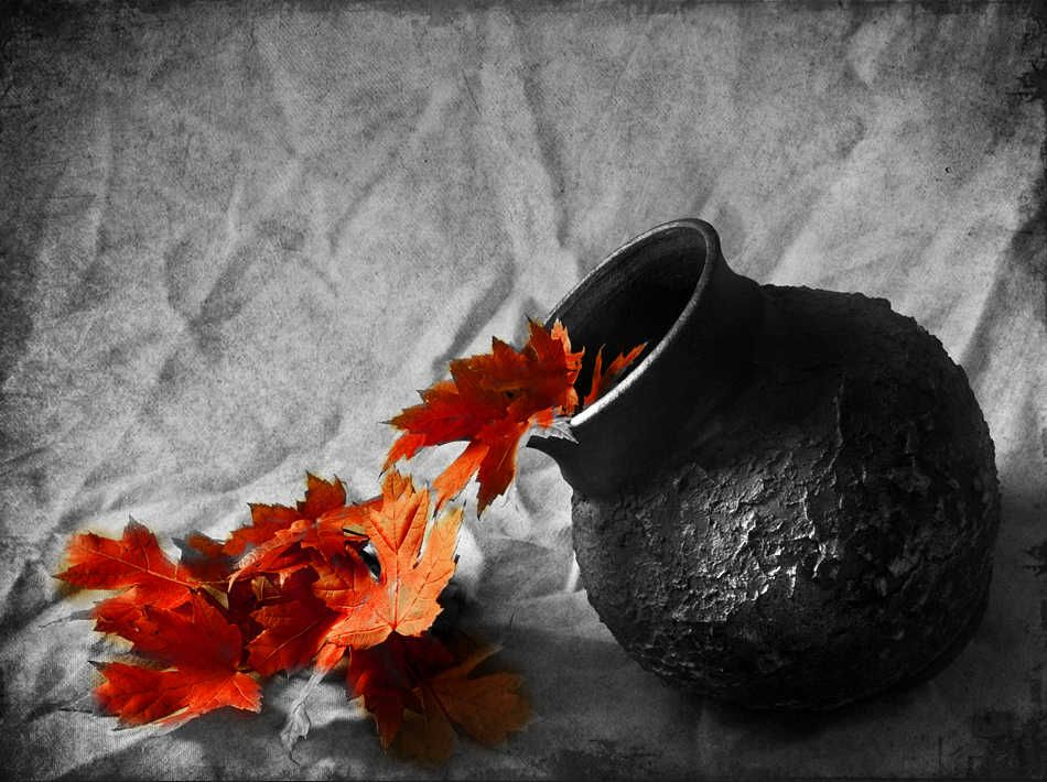 Black and white photos with color accents still life black and white photography with color