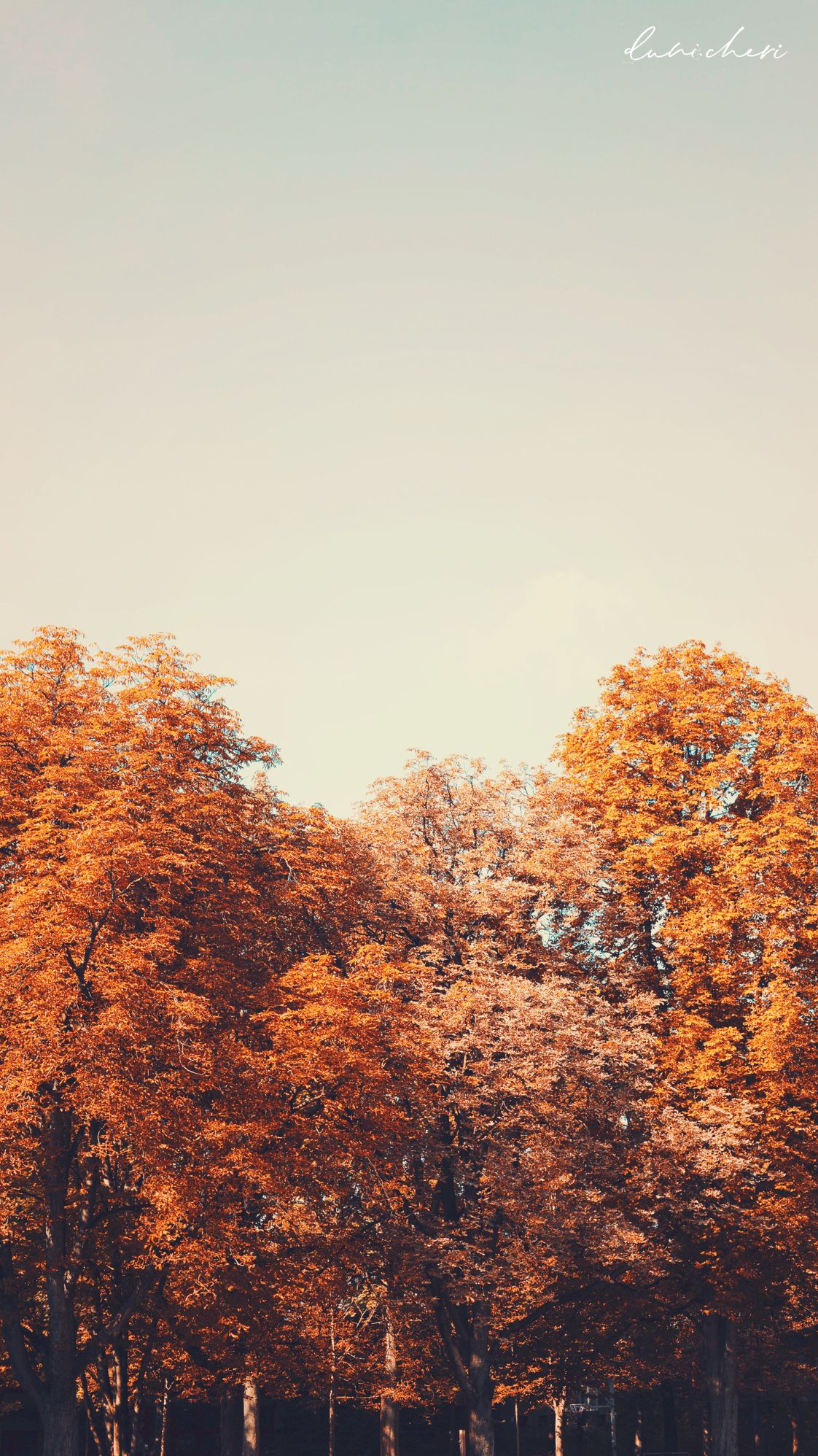 Free Download: Autumn Wallpaper ♥ Desktop & Mobile #wallpaper