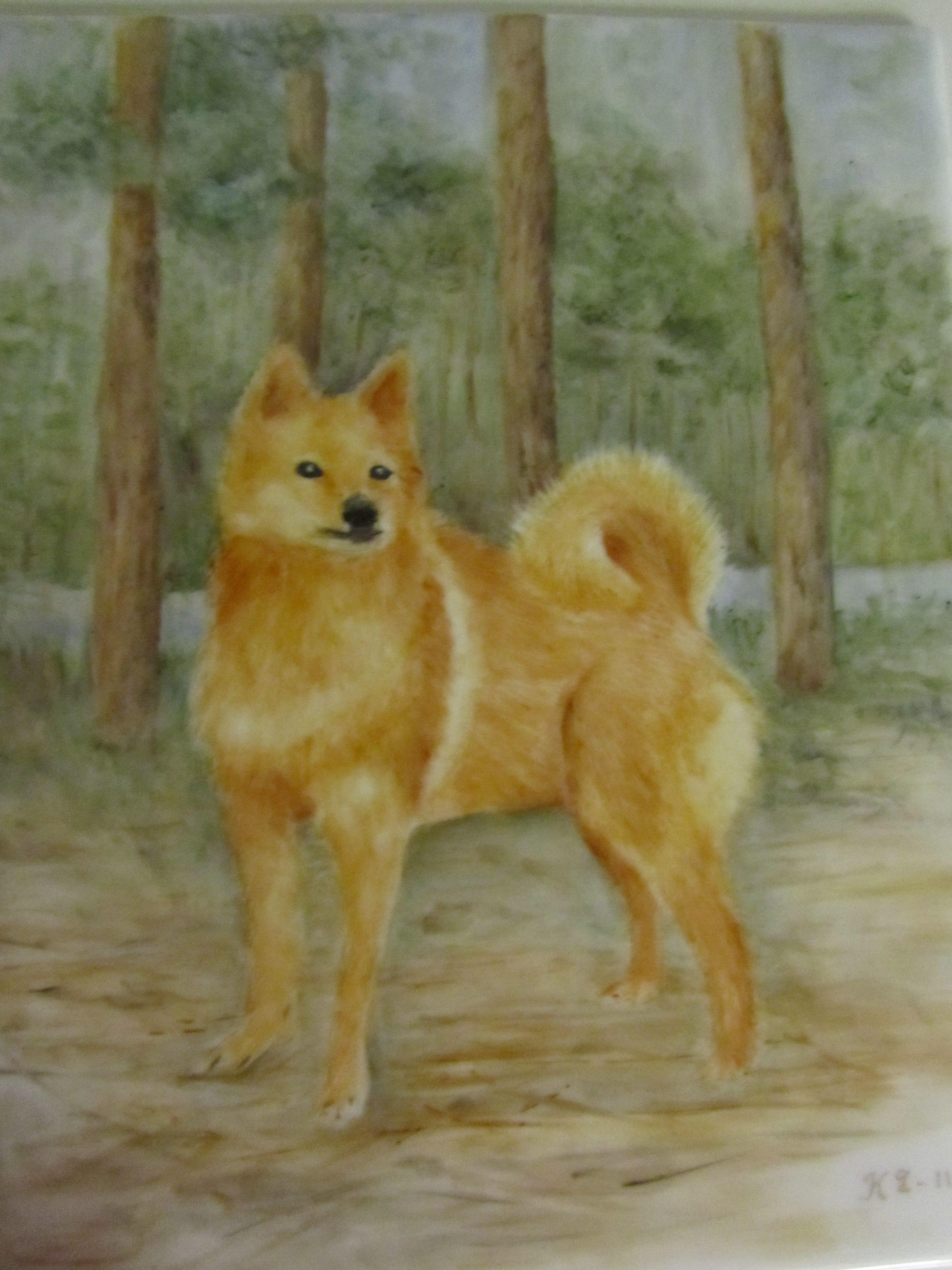 Ystävän pystykorva koira