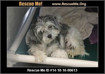 Health: Needs to be Spayed THis little girl needs a hero to get her out of this kill shelter that lacks compassion You can see it in their post))))) TIMES UP! This Shih Tzu needs rescue now! EUTH LISTED. Let's get her out! Spec Needs - Behavior. Orange County Shelter, CA URGENT EUTH LISTED! UH-OH! Who me? Rescue only for behavior? Please share for RESCUE, FOSTER, and PLEDGE$$! APPLE (A1245974) UNALTERED FEMALE , GREY AND WHITE SHIH TZU MIX, Age: 3 YEARS Animal Location: OC ...