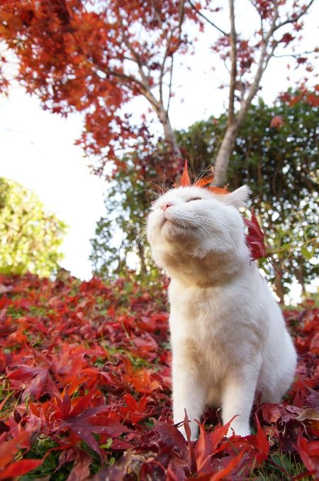 cybergata:  Meditation on red leaves.