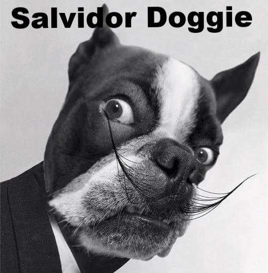 Animals, Dogs, Boston terrier