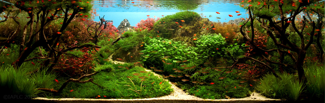Exceptional Like A Tree Swaying In The Breeze | Aquascape | Pinterest | Breeze And  Aquariums