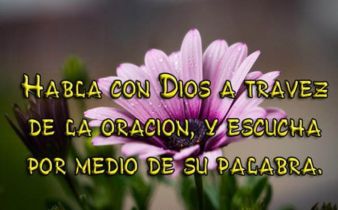 Imágenes De Flores Hermosas Con Frases Cristianas Frases