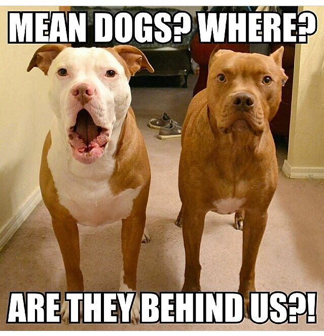 Pitbulls Good Dogs Only Bad Owners Funny Animal Pictures Cute