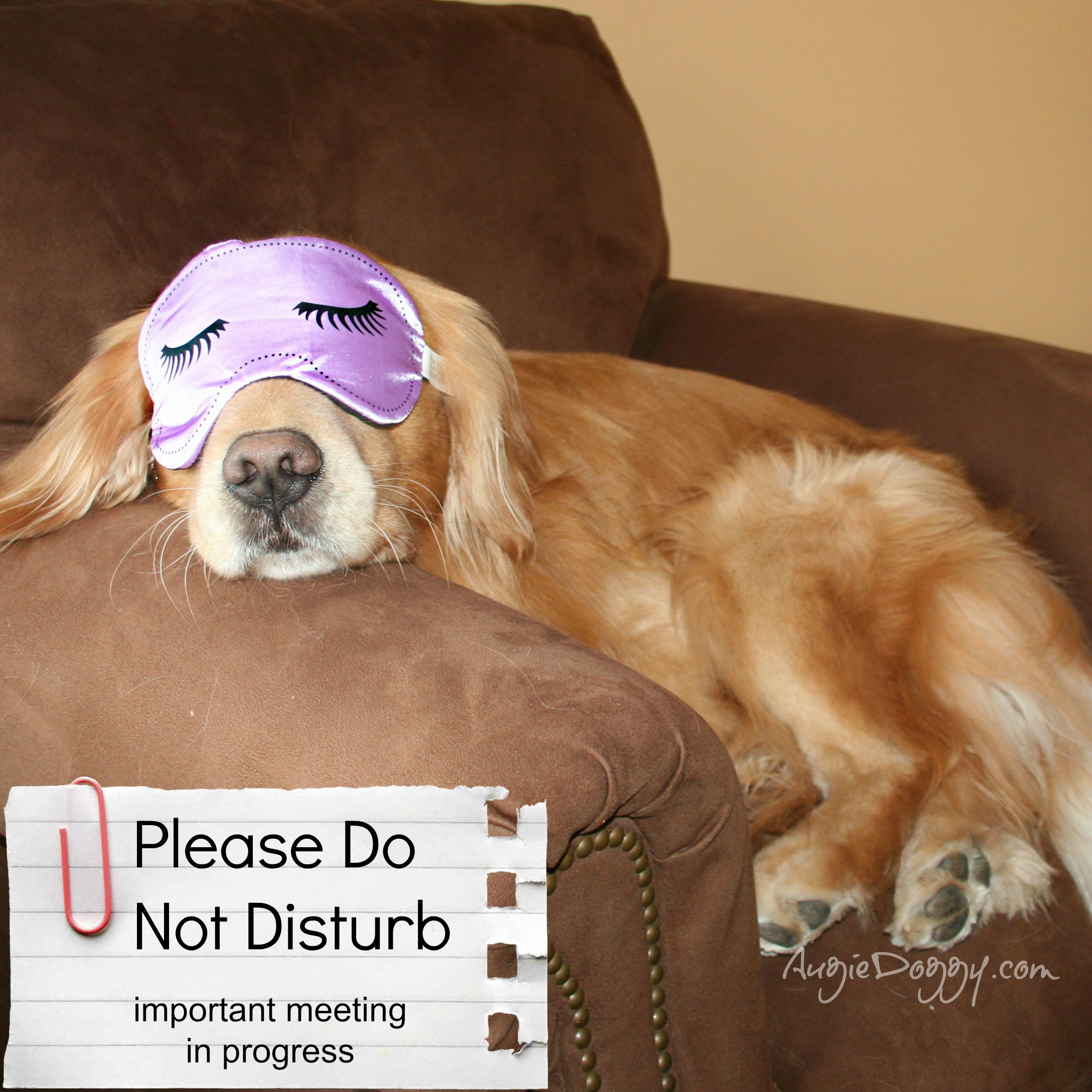 Just Another Hard Day At The Office Golden Retriever Funny